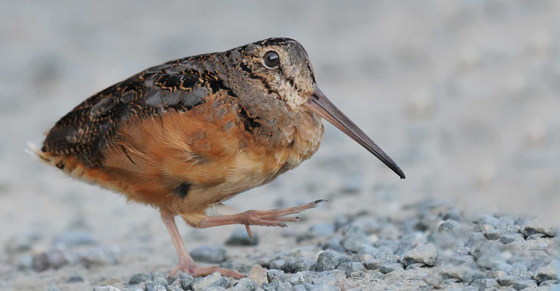 Birding 1